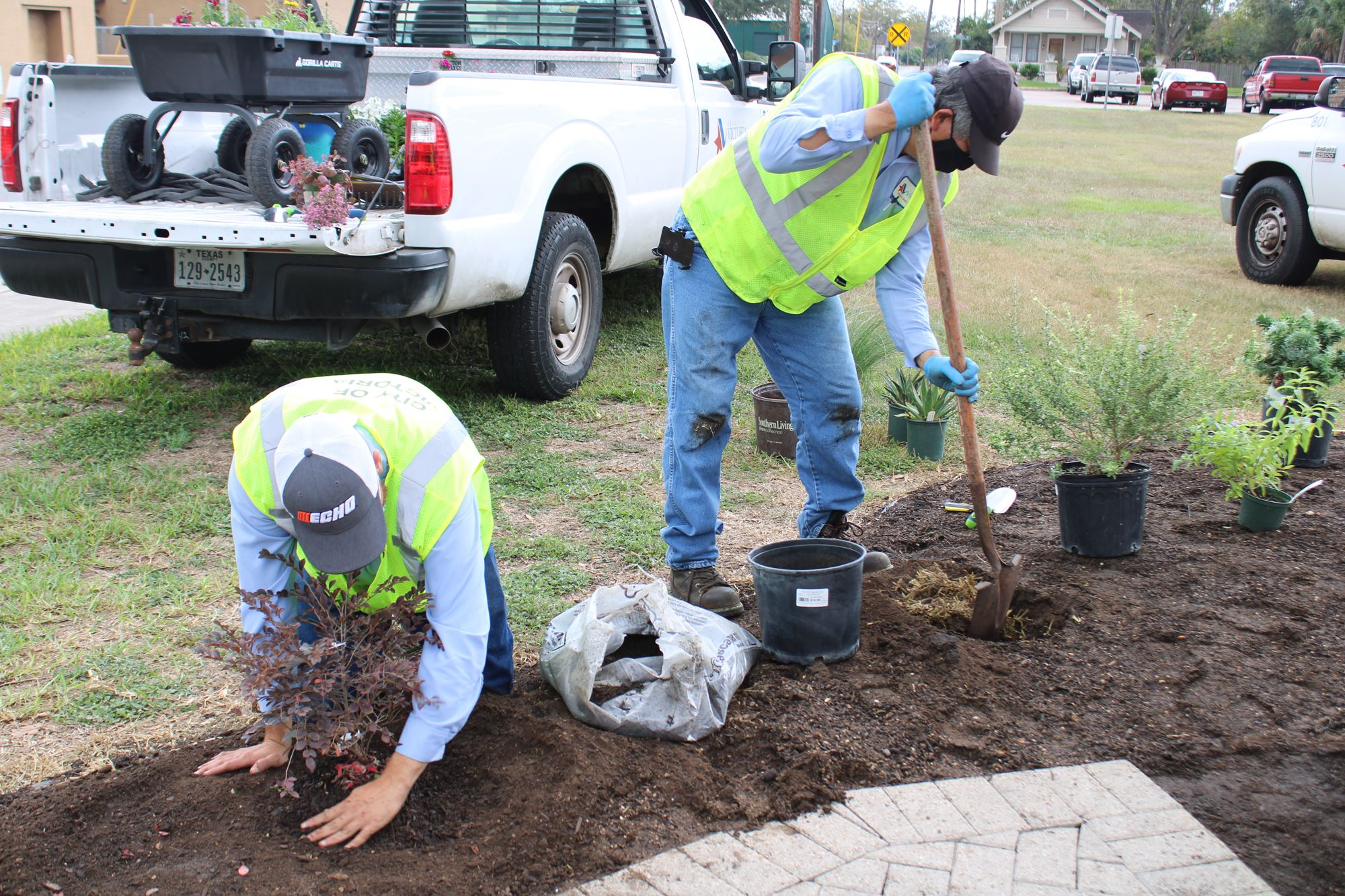 In a flowerbed, a man digs a hole while another man scoops dirt around a recently planted plant.